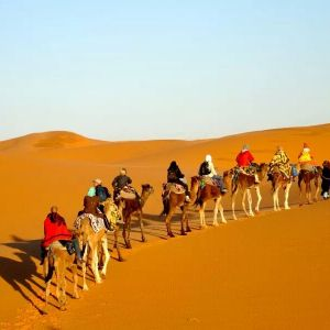 camel excursion in the desert